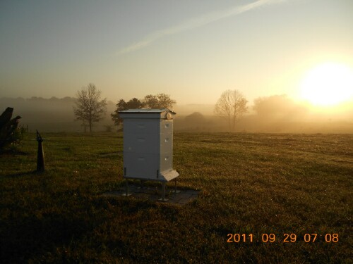 Herb Lester's Apiary