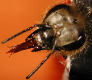 Pesticide Combination Affects Bees' Ability to Learn