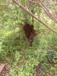 Lascassas Swarm - 15 April 2013