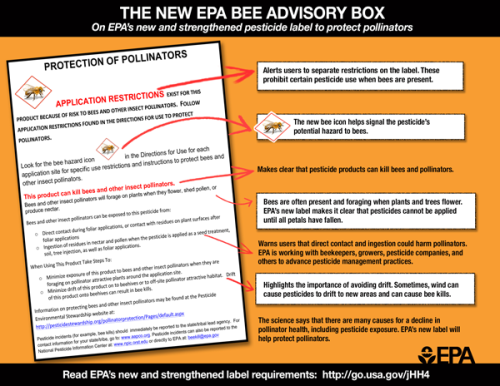 bee_label_info_graphic